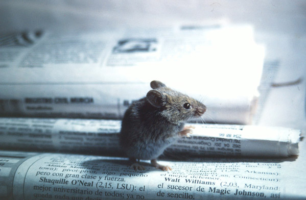 La prensa de papel plantea nuevos ajustes para evitar su desaparición prematura